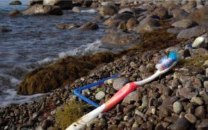 Toothbrush Along Shoreline